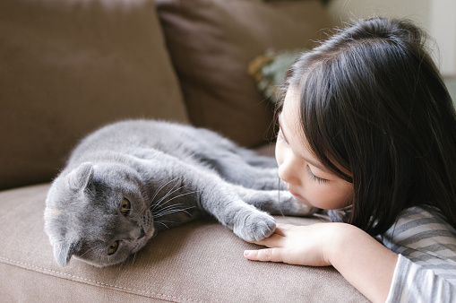 Little girl hanging out with her Scottish Fold cat