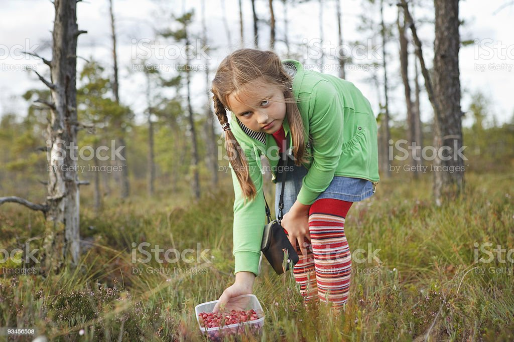 Little girl harvesting wild cranberries royalty-free stock photo
