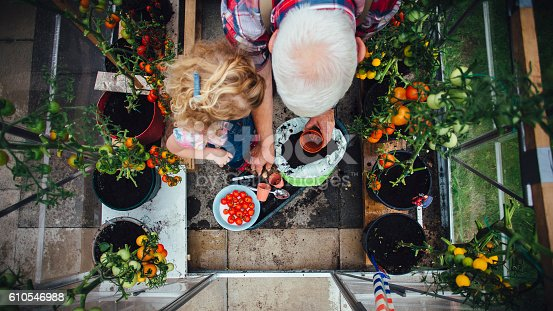 istock Little Girl Helping Grandad with the Gardening 610546988