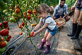 Grandfather growing vegetables with grandchildren and family at farm