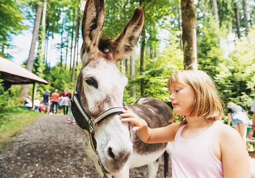 Little girl hiking with donkeys in summer camp for children