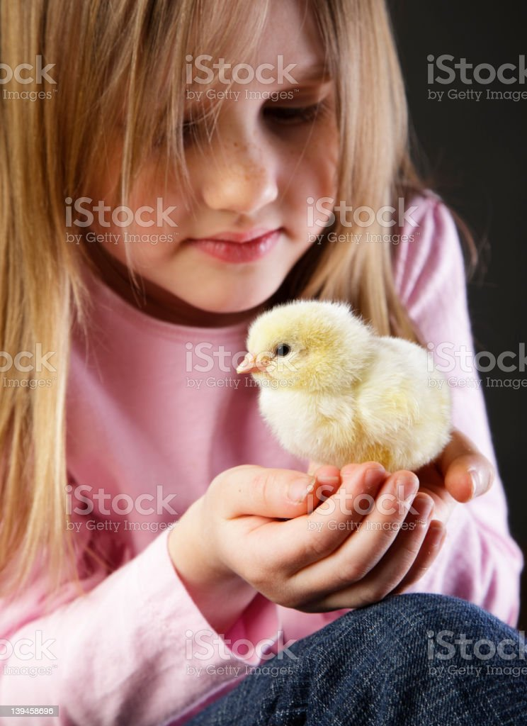 Little Girl holding a Baby Chick royalty-free stock photo