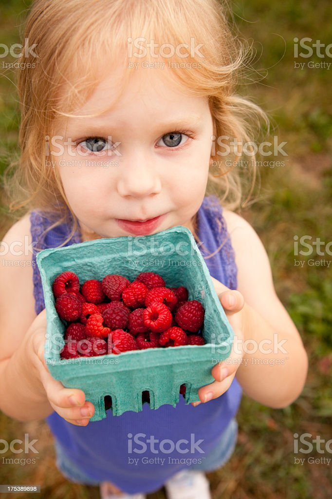 Little Girl Holding Carton of Raspberries She Picked royalty-free stock photo