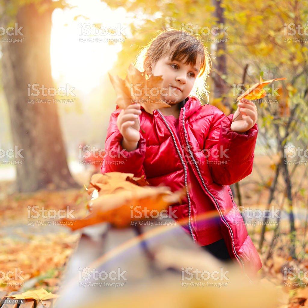 Little Girl Holding Yellow Maple Leaves stock photo