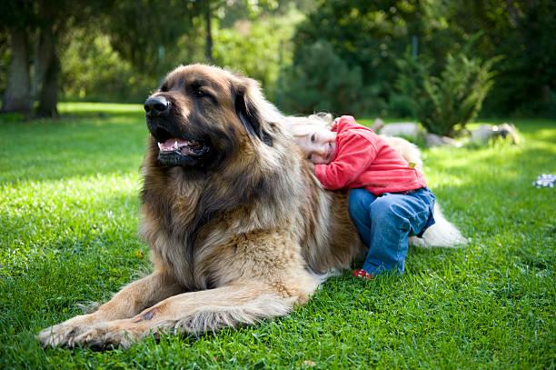 Little girl hugging her dog stock photo