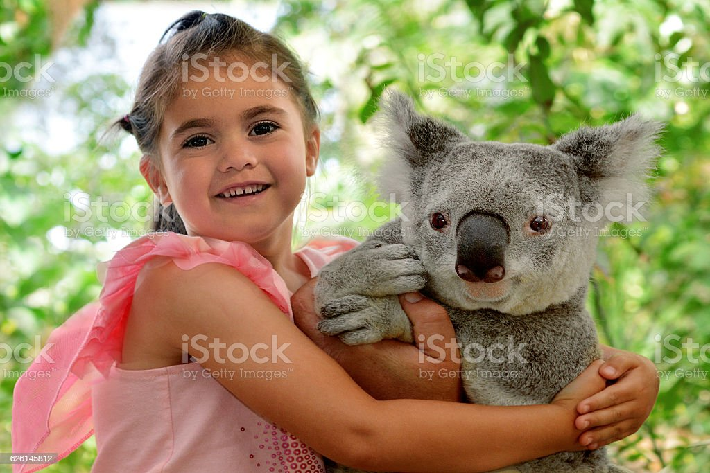 Little girl hugs Koala stock photo