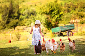 Little girl in a hat and dress korimt chickens who walk on a meadow on a farm.Organic breeding.Selective focus