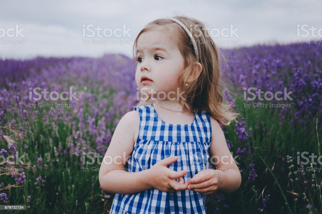 Little girl in a lavender field. stock photo