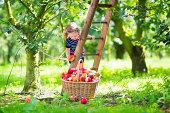 小さな女の子にはアップル庭園