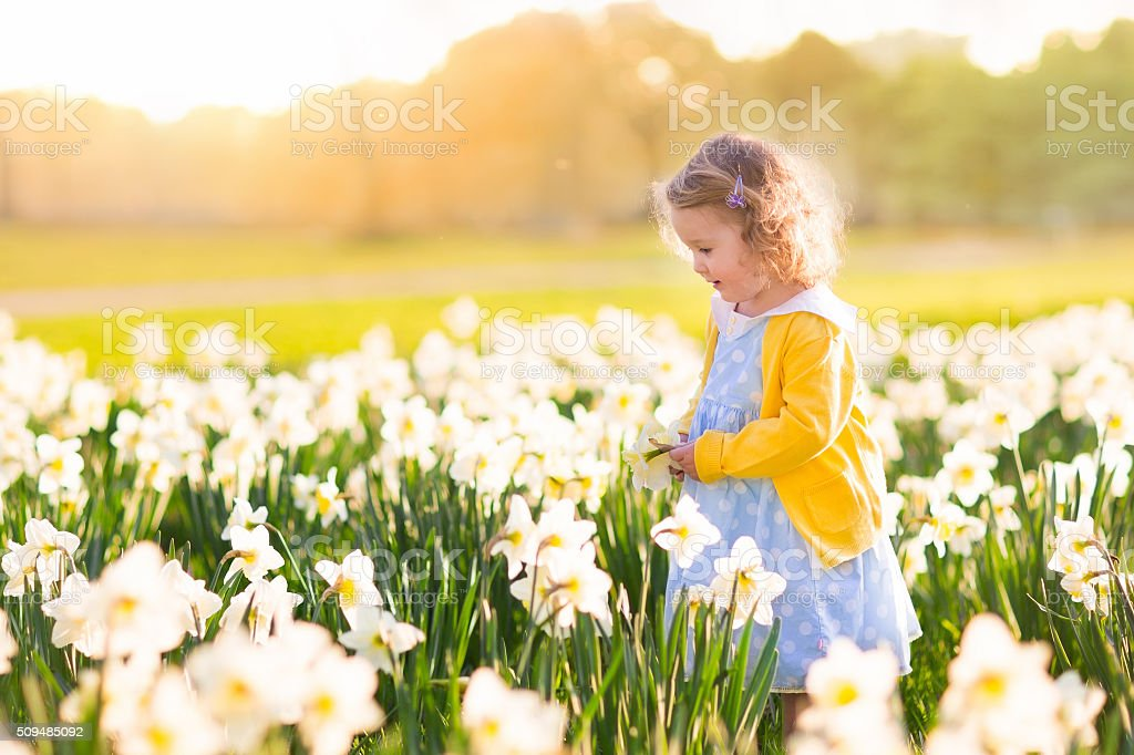 Little girl in daffodil field stock photo