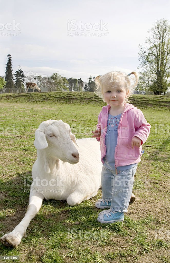 little girl in petting zoo with goat royalty-free stock photo