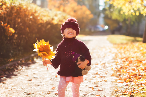 little girl in red sweater and beret with a bouquet of yellow maple leaves and toy laughs on the street in autumn
