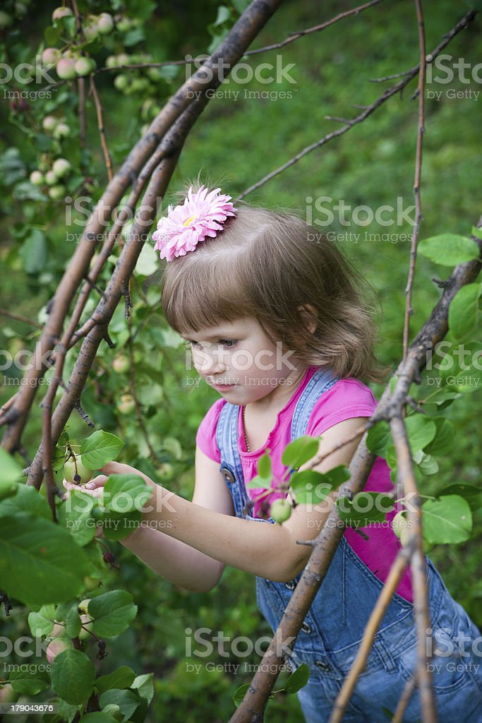 Little girl in the apple orchard royalty-free stock photo