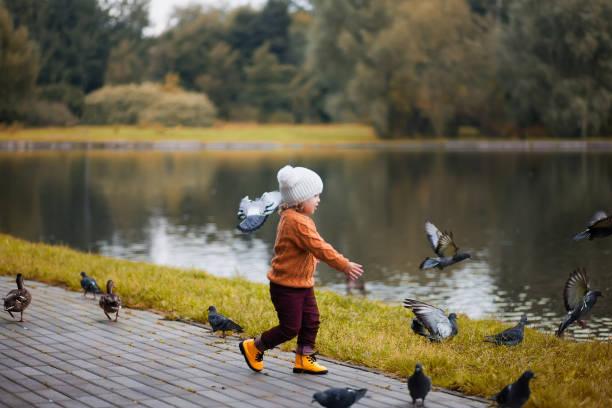 klein meisje in het najaar park, runing met duiven. - vogel herfst stockfoto's en -beelden