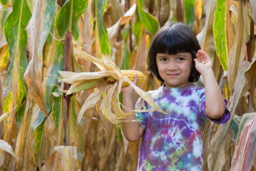 Little Girl in the Cornfield