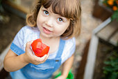 Little girl in the garden, eating red organic tomato, agriculture and child
