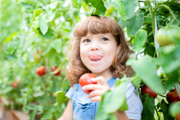 Little girl in the greenhouse with tomato plants stock photo