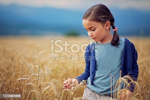 Little girl is caressing wheat in the middle of a field