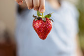 Little girl is holding a strawberry in her hand. Close-Up Healthy Eating Concept.