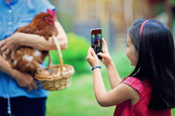 kleines mädchen fotografiert von ihrer großmutter hält henne - lustiges huhn bilder stock-fotos und bilder