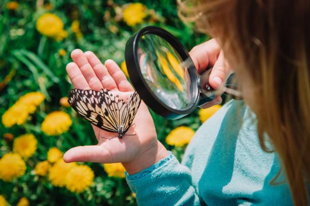 Little girl looking at butterfy kids learning nature picture id1149800872?b=1&k=6&m=1149800872&s=612x612&w=0&h=bdadveuy85t8eqqsxwoj7qa00umznh5tatfaywtlzai=
