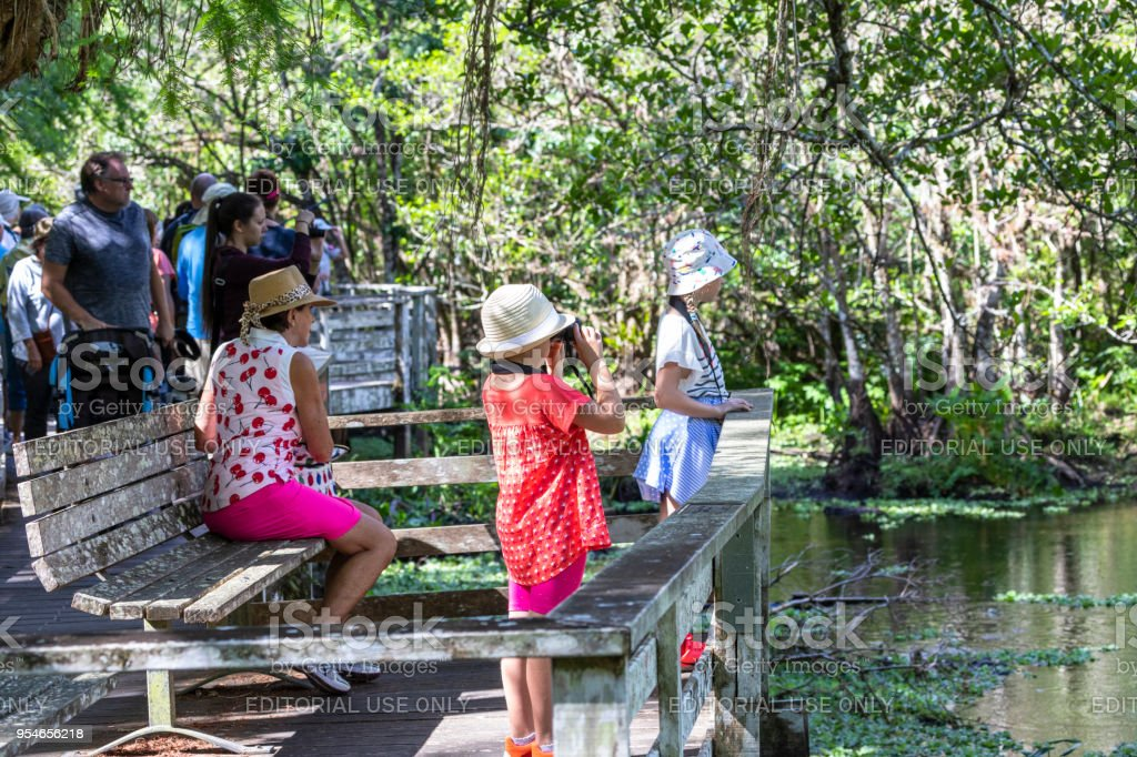 Little girl looks through binoculars during a guided tour on a boardwalk in the Corkscrew Sanctuary in Florida stock photo
