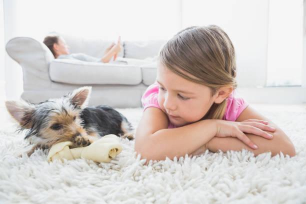 kleines mädchen auf teppich liegend mit yorkshire-terrier - teppich englisch stock-fotos und bilder
