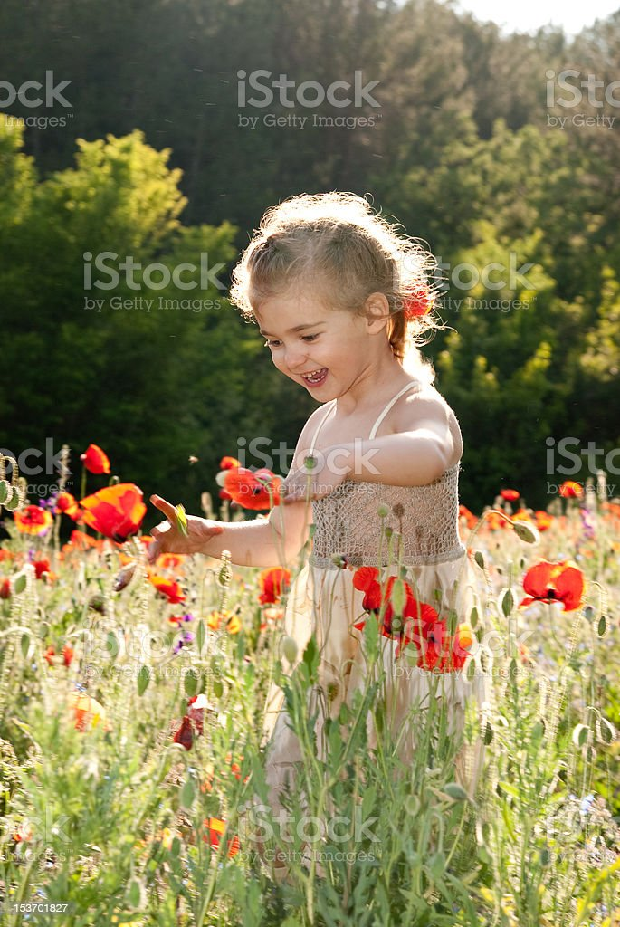 little girl  on the poppy field royalty-free stock photo