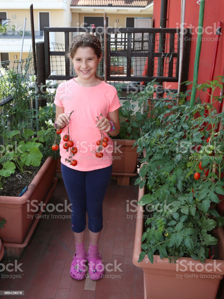 little girl on the terrace of her house shows ripe tomatoes pick zbiór zdjęć royalty-free
