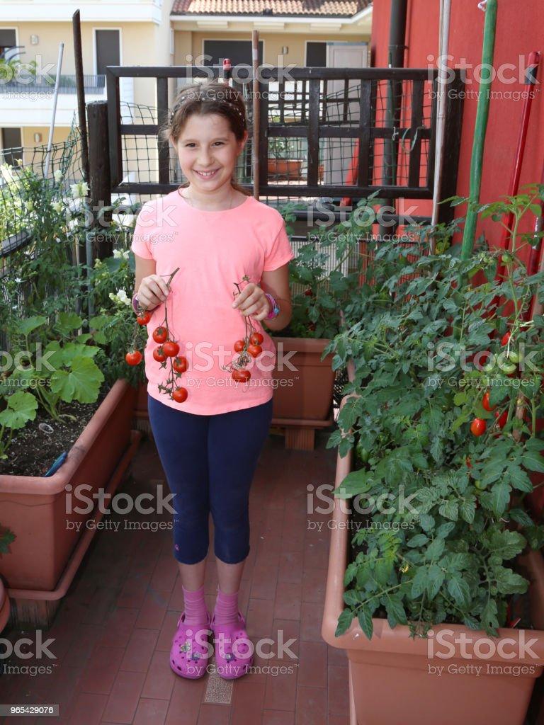 kleine Mädchen auf der Terrasse ihres Hauses zeigt reife Tomaten holen - Lizenzfrei Agrarbetrieb Stock-Foto
