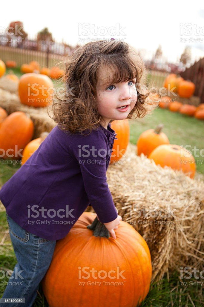 Little Girl Picking a Pumpkin from the Patch royalty-free stock photo