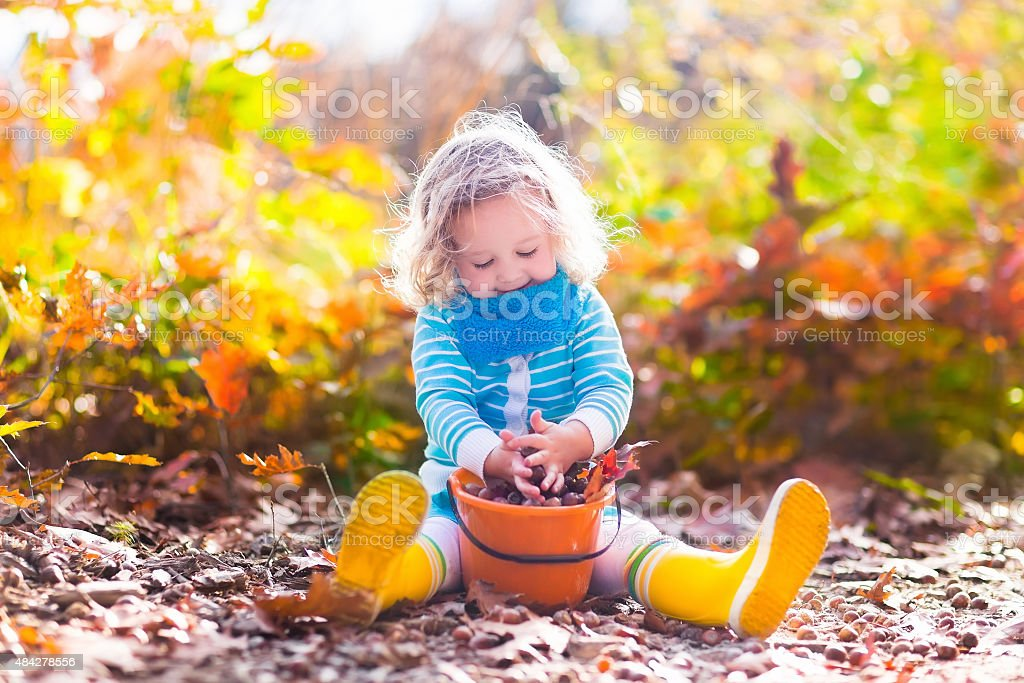 Little girl picking acorns in autumn park stock photo