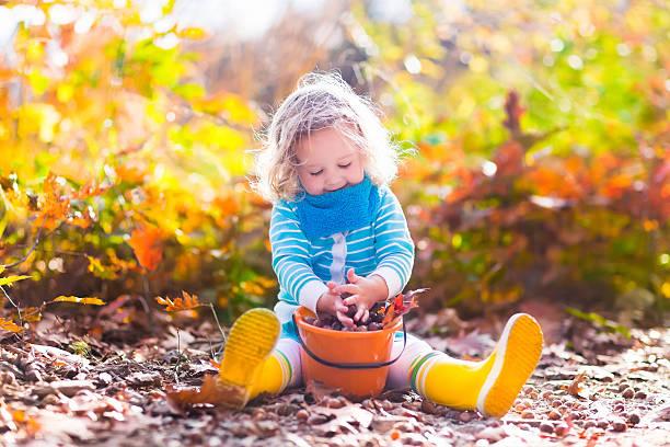 Little girl picking acorns in autumn park stock photo