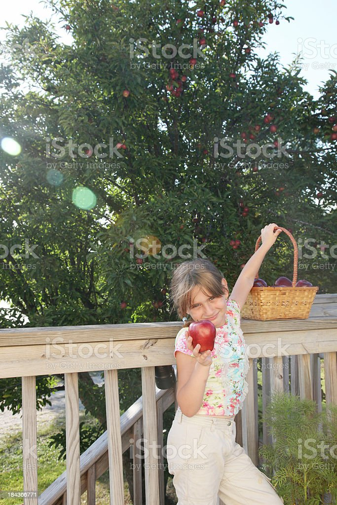 Little girl picking apples royalty-free stock photo