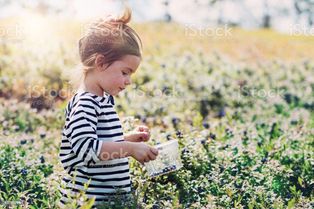 Little girl picking blueberries stock photo