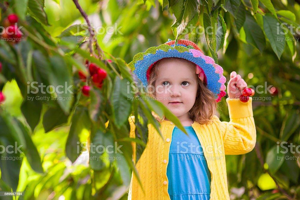 Little girl picking cherry from garden tree stock photo