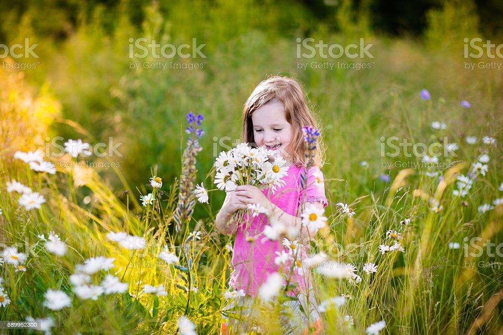 Little girl picking daisy flower field stock photo
