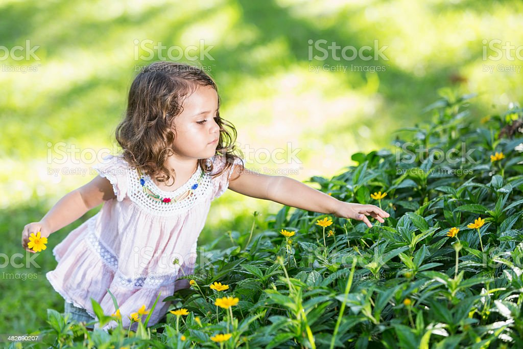 Little girl picking flowers stock photo