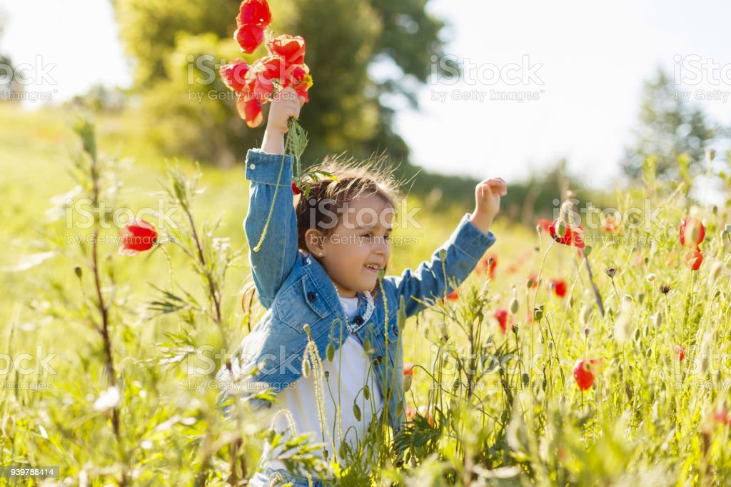 Little girl picking poppies in a field stock photo