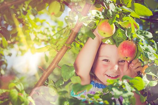 Little girl picking up apples