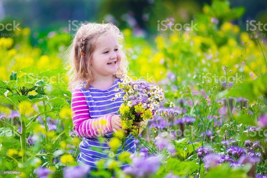 Little girl picking wild flowers in a field stock photo