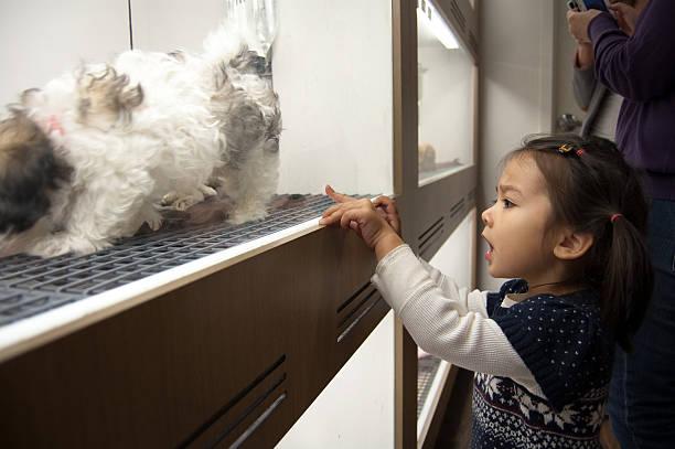 Petite fille prend un Shih Tzu chiot de magasin pour animaux de compagnie - Photo