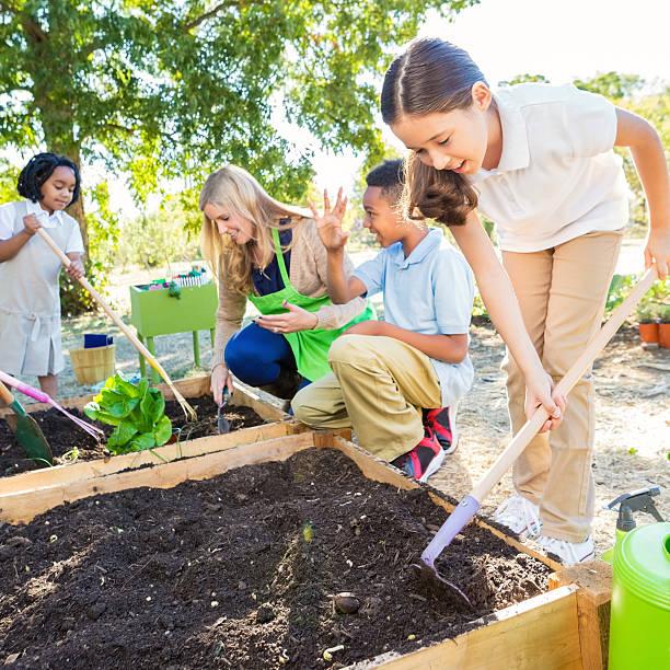 rapariga plantação vegtables na escola jardim durante aula de ciências - teacher school solo imagens e fotografias de stock