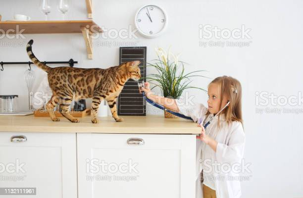 Little girl playing veterinary with her kitten on the kitchen picture id1132111961?b=1&k=6&m=1132111961&s=612x612&h=pp81ew4dnnrzbkaoujr5nwbyx99xp2 oymykymi9pte=