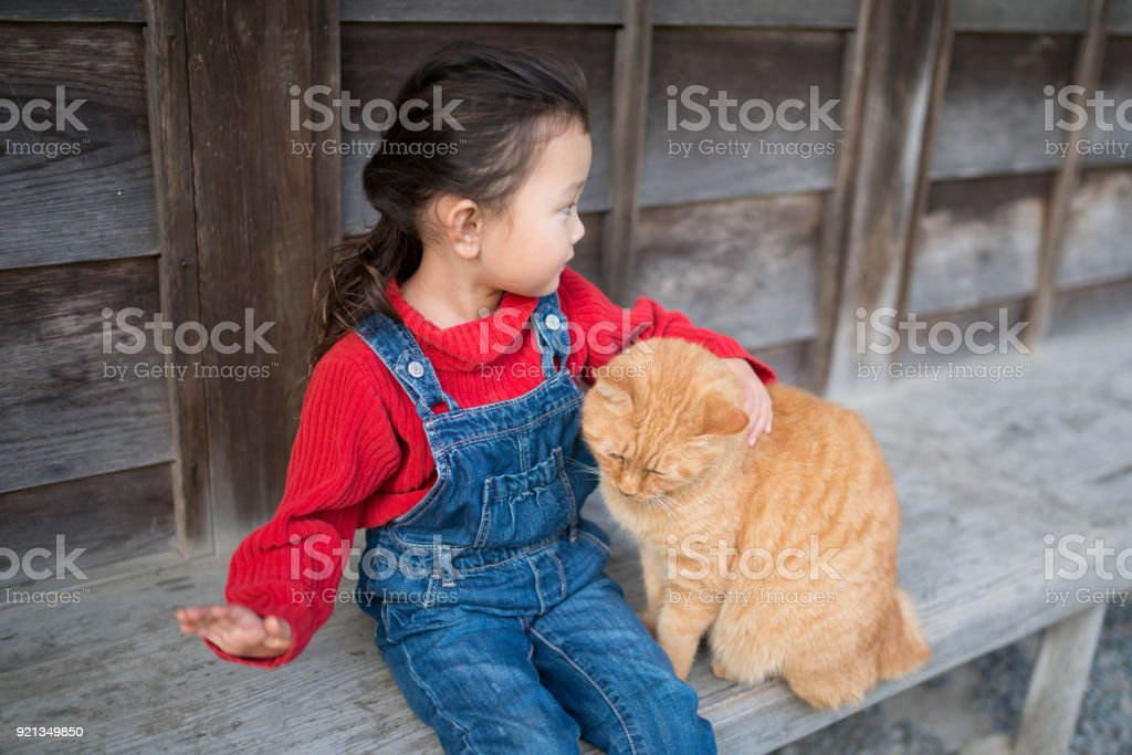 Little girl playing with a cat stock photo
