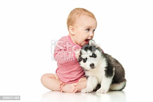 istock Little girl playing with a puppy husky 536031493
