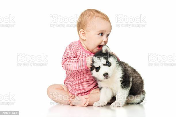 Little girl playing with a puppy husky picture id536031493?b=1&k=6&m=536031493&s=612x612&h=sd9fl3evucgtg pjf8sotpba3m8krawc02okxzrarus=