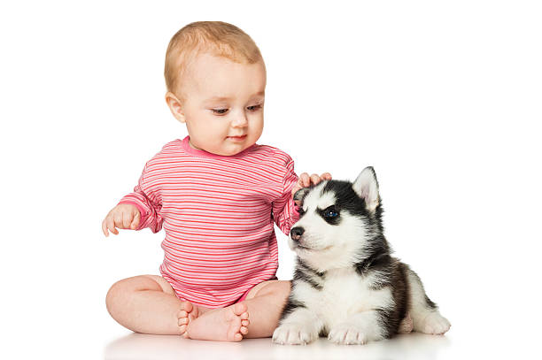 Little girl playing with a puppy picture id466732460?b=1&k=6&m=466732460&s=612x612&w=0&h=opqdy3vv9jexfcu3znmvc f7b86i4y9jjwhr4ijz0ry=