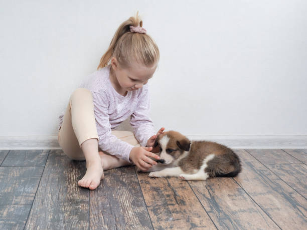 Little girl playing with a puppy the child sits on the floor and the picture id807695740?b=1&k=6&m=807695740&s=612x612&w=0&h=3gu1t0cu awa un2tz621qmfnhr3mqrg qkjl ey8mo=