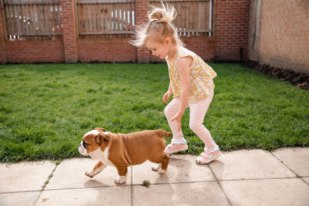 Little girl playing with her british bulldog picture id1018276164?b=1&k=6&m=1018276164&s=612x612&w=0&h=hvdwb2bo2ahlshbcbqsgn5b89ceg7tshuvkstjwvtl0=